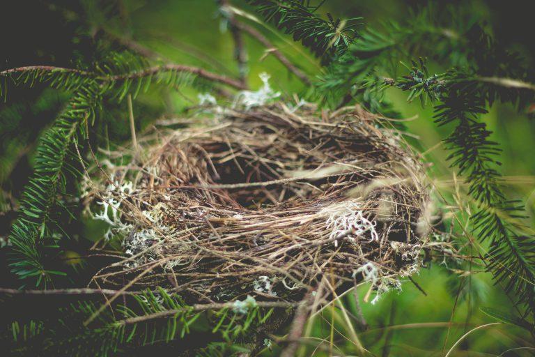 מסדרת את הקן שלי - שירה שקד - מגזין גלויה